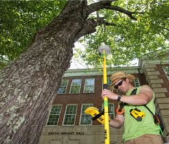Arborist Consultations-La Mesa CA Tree Trimming and Stump Grinding Services-We Offer Tree Trimming Services, Tree Removal, Tree Pruning, Tree Cutting, Residential and Commercial Tree Trimming Services, Storm Damage, Emergency Tree Removal, Land Clearing, Tree Companies, Tree Care Service, Stump Grinding, and we're the Best Tree Trimming Company Near You Guaranteed!