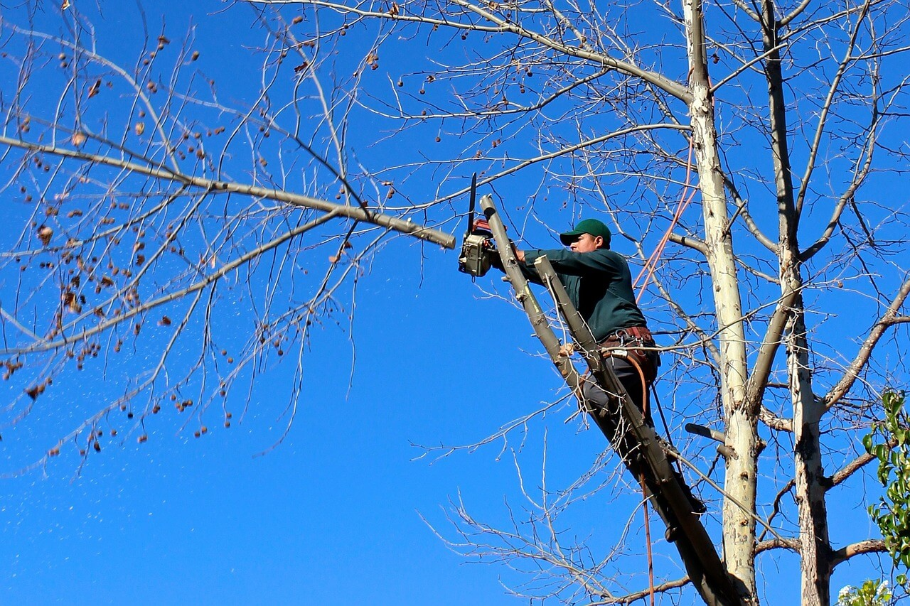 Contact Us-La Mesa CA Tree Trimming and Stump Grinding Services-We Offer Tree Trimming Services, Tree Removal, Tree Pruning, Tree Cutting, Residential and Commercial Tree Trimming Services, Storm Damage, Emergency Tree Removal, Land Clearing, Tree Companies, Tree Care Service, Stump Grinding, and we're the Best Tree Trimming Company Near You Guaranteed!