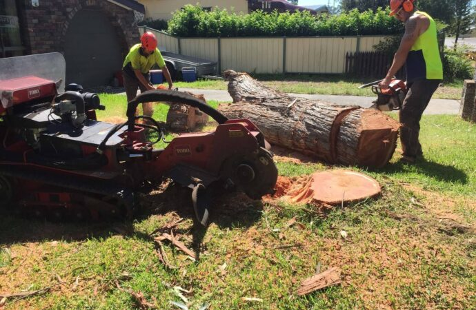 La Mesa CA Tree Trimming and Stump Grinding Services Home Page Image-We Offer Tree Trimming Services, Tree Removal, Tree Pruning, Tree Cutting, Residential and Commercial Tree Trimming Services, Storm Damage, Emergency Tree Removal, Land Clearing, Tree Companies, Tree Care Service, Stump Grinding, and we're the Best Tree Trimming Company Near You Guaranteed!