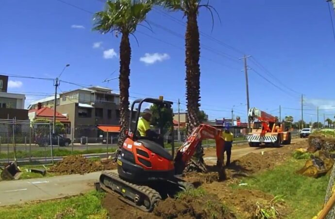 Palm Tree Removal-La Mesa CA Tree Trimming and Stump Grinding Services-We Offer Tree Trimming Services, Tree Removal, Tree Pruning, Tree Cutting, Residential and Commercial Tree Trimming Services, Storm Damage, Emergency Tree Removal, Land Clearing, Tree Companies, Tree Care Service, Stump Grinding, and we're the Best Tree Trimming Company Near You Guaranteed!