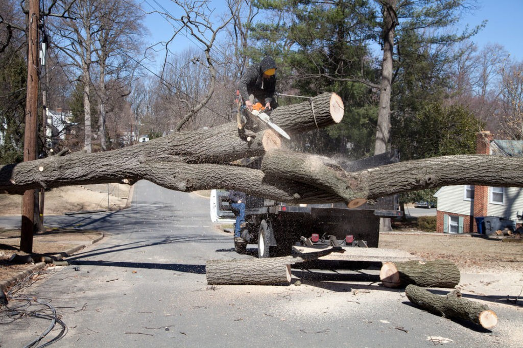 Residential Tree Services-La Mesa CA Tree Trimming and Stump Grinding Services-We Offer Tree Trimming Services, Tree Removal, Tree Pruning, Tree Cutting, Residential and Commercial Tree Trimming Services, Storm Damage, Emergency Tree Removal, Land Clearing, Tree Companies, Tree Care Service, Stump Grinding, and we're the Best Tree Trimming Company Near You Guaranteed!