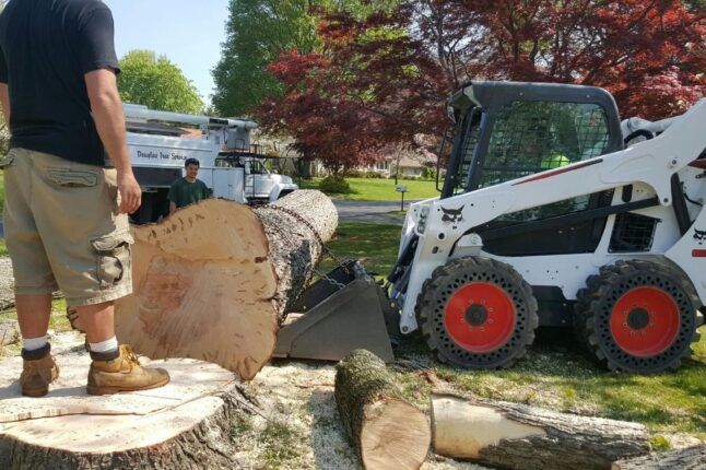 San Carlos-La Mesa CA Tree Trimming and Stump Grinding Services-We Offer Tree Trimming Services, Tree Removal, Tree Pruning, Tree Cutting, Residential and Commercial Tree Trimming Services, Storm Damage, Emergency Tree Removal, Land Clearing, Tree Companies, Tree Care Service, Stump Grinding, and we're the Best Tree Trimming Company Near You Guaranteed!