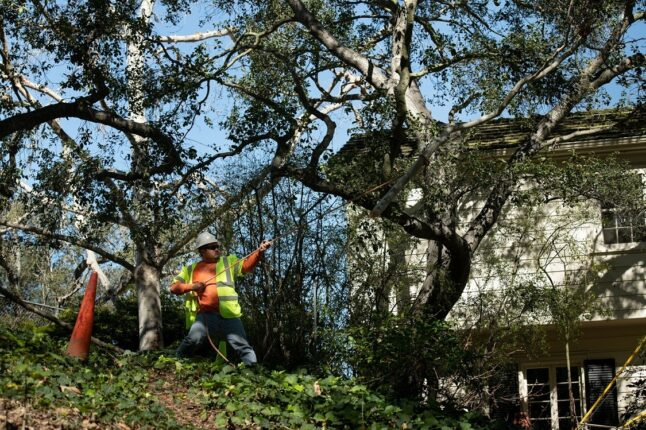 San Diego-La Mesa CA Tree Trimming and Stump Grinding Services-We Offer Tree Trimming Services, Tree Removal, Tree Pruning, Tree Cutting, Residential and Commercial Tree Trimming Services, Storm Damage, Emergency Tree Removal, Land Clearing, Tree Companies, Tree Care Service, Stump Grinding, and we're the Best Tree Trimming Company Near You Guaranteed!