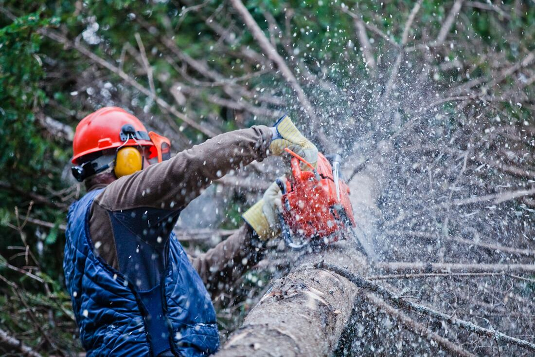 Spring Valley-La Mesa CA Tree Trimming and Stump Grinding Services-We Offer Tree Trimming Services, Tree Removal, Tree Pruning, Tree Cutting, Residential and Commercial Tree Trimming Services, Storm Damage, Emergency Tree Removal, Land Clearing, Tree Companies, Tree Care Service, Stump Grinding, and we're the Best Tree Trimming Company Near You Guaranteed!