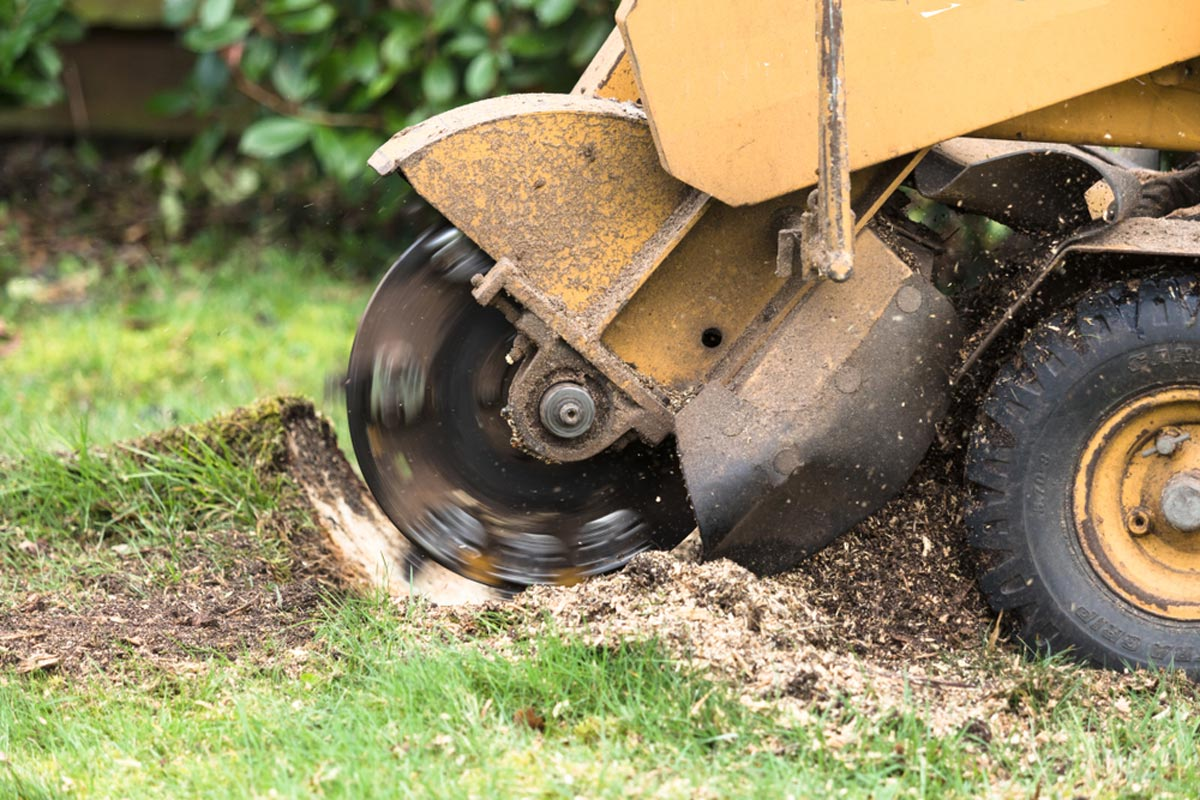 Stump Grinding-La Mesa CA Tree Trimming and Stump Grinding Services-We Offer Tree Trimming Services, Tree Removal, Tree Pruning, Tree Cutting, Residential and Commercial Tree Trimming Services, Storm Damage, Emergency Tree Removal, Land Clearing, Tree Companies, Tree Care Service, Stump Grinding, and we're the Best Tree Trimming Company Near You Guaranteed!