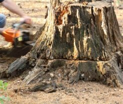Stump Removal-La Mesa CA Tree Trimming and Stump Grinding Services-We Offer Tree Trimming Services, Tree Removal, Tree Pruning, Tree Cutting, Residential and Commercial Tree Trimming Services, Storm Damage, Emergency Tree Removal, Land Clearing, Tree Companies, Tree Care Service, Stump Grinding, and we're the Best Tree Trimming Company Near You Guaranteed!