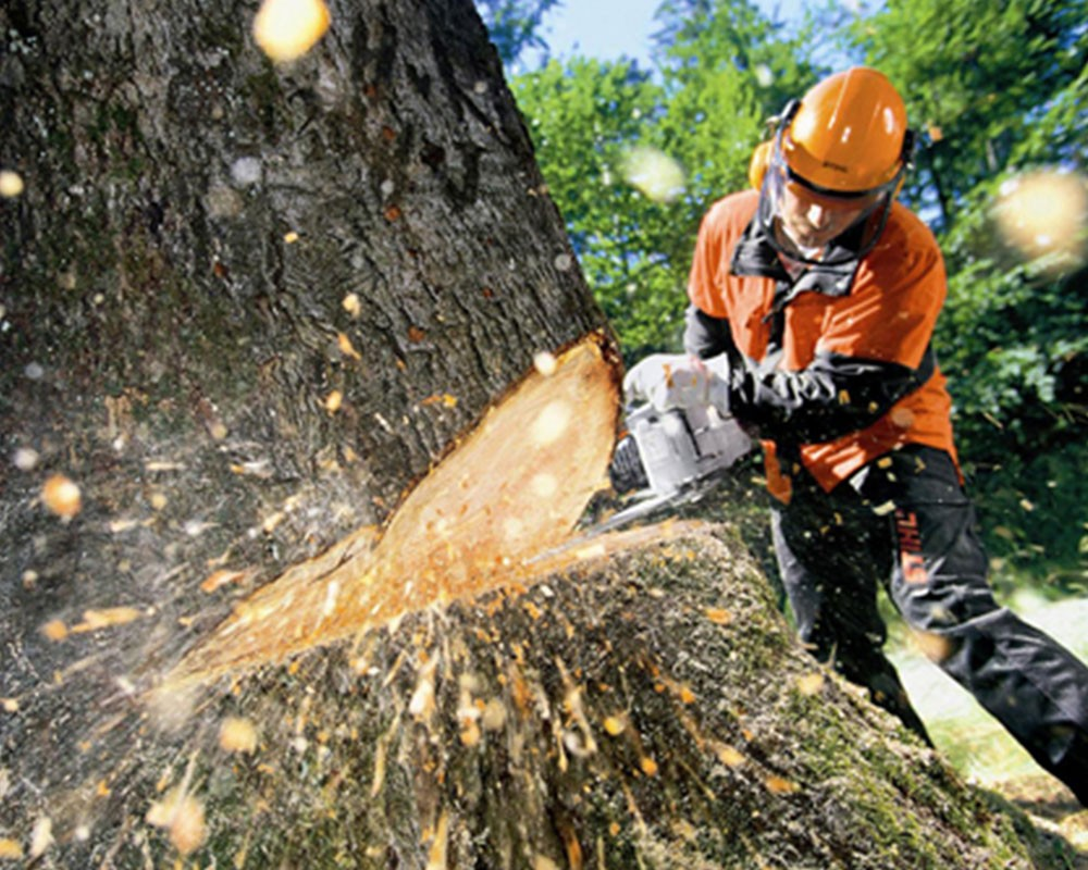 Tree Cutting-La Mesa CA Tree Trimming and Stump Grinding Services-We Offer Tree Trimming Services, Tree Removal, Tree Pruning, Tree Cutting, Residential and Commercial Tree Trimming Services, Storm Damage, Emergency Tree Removal, Land Clearing, Tree Companies, Tree Care Service, Stump Grinding, and we're the Best Tree Trimming Company Near You Guaranteed!