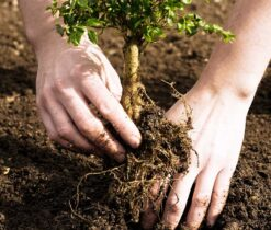 Tree Planting-La Mesa CA Tree Trimming and Stump Grinding Services-We Offer Tree Trimming Services, Tree Removal, Tree Pruning, Tree Cutting, Residential and Commercial Tree Trimming Services, Storm Damage, Emergency Tree Removal, Land Clearing, Tree Companies, Tree Care Service, Stump Grinding, and we're the Best Tree Trimming Company Near You Guaranteed!