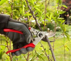 Tree Pruning-La Mesa CA Tree Trimming and Stump Grinding Services-We Offer Tree Trimming Services, Tree Removal, Tree Pruning, Tree Cutting, Residential and Commercial Tree Trimming Services, Storm Damage, Emergency Tree Removal, Land Clearing, Tree Companies, Tree Care Service, Stump Grinding, and we're the Best Tree Trimming Company Near You Guaranteed!