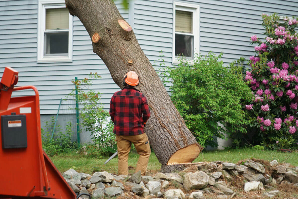Tree Removal-La Mesa CA Tree Trimming and Stump Grinding Services-We Offer Tree Trimming Services, Tree Removal, Tree Pruning, Tree Cutting, Residential and Commercial Tree Trimming Services, Storm Damage, Emergency Tree Removal, Land Clearing, Tree Companies, Tree Care Service, Stump Grinding, and we're the Best Tree Trimming Company Near You Guaranteed!